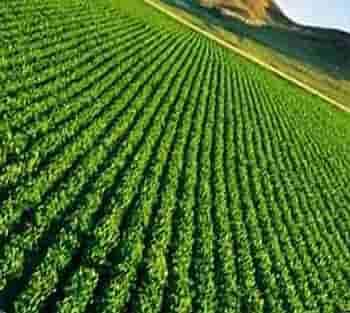 استارتاپ های ایرانی یا خارجی بخش کشاورزی