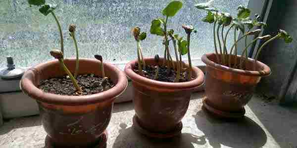 کود گیاهان