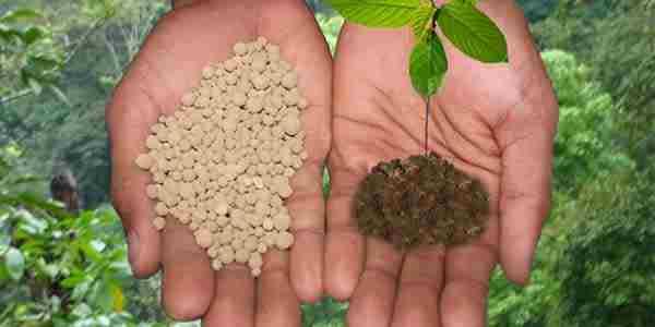کود شیمیایی بهتر است یا کود آهن