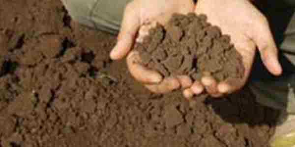 نیاز گیاهان به کود آهن