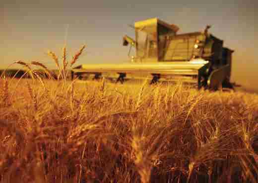 نرخ 354 هزار میلیارد ریالی ارزش افزوده در بخش کشاورزی