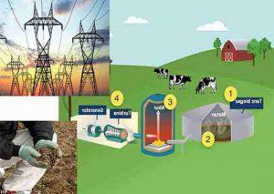 تولید برق از فضولات دامی و حیوانی