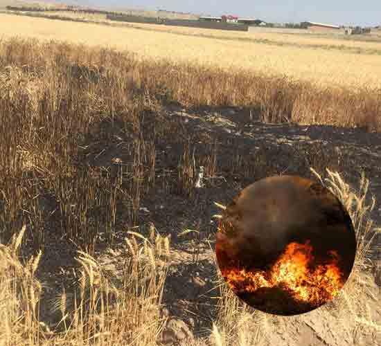 آتش سوزی های متعدد در مزارع کشور