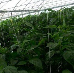 درآمد بالا با احداث گلخانه