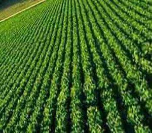 راه های صرفه جویی در مصرف آب در کشاورزی