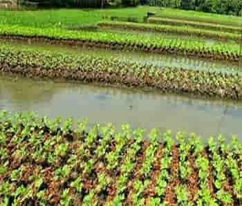 خسارت کرونا به بخش کشاورزی