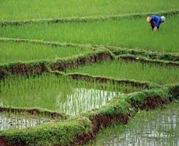 تولید بیوکمپوست و بیوگاز از شالیزارهای برنج