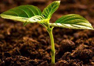 چه-نوع-خاکی-برای-کشاورزی-مناسب-نیست؟