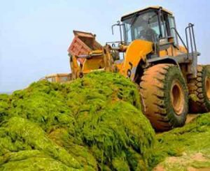 کاربرد جلبکها در کشاورزی پایدار
