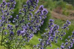 بهترین گیاهان دارویی و آشنایی با آن ها
