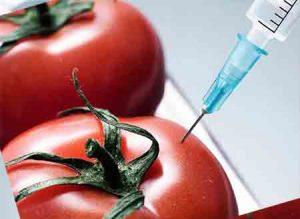 تاثیر گیاهان تراریخته بر سلامت انسان