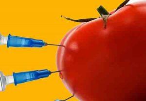 محصولات تراژن چیست مزایای گیاهان تراریخته