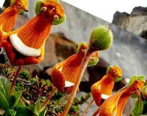 عجیب ترین، نایاب ترین و حیرت آور ترین گلهای جهان