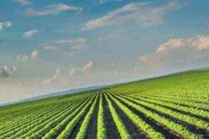 محصولات کشاورزی صنعتی ایران