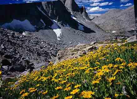 معرفی گیاهان کوهستانی